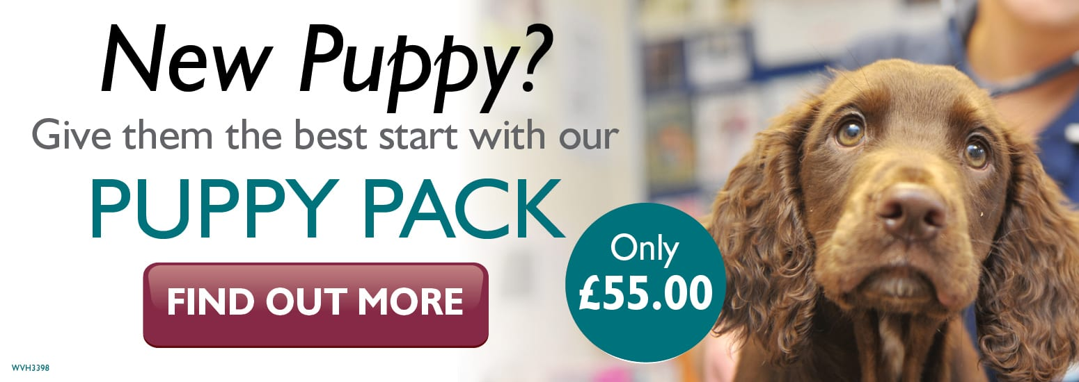 Puppy Pack covering puppy injections, flea & worm treatment, and much more for only £55 at vets in Malpas