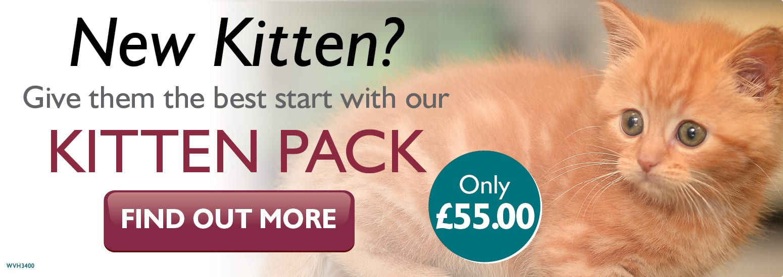 Kitten Pack covering kitten injections, flea & worm treatment, and much more for only £55 at vets in Malpas